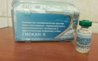 Гискан-5: сыворотка для собак