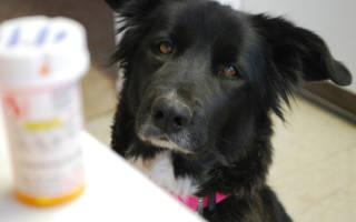 Как дать таблетку щенку?