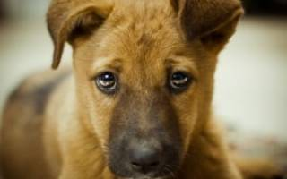 Как отучить собаку гадить дома: от щенка до взрослой собаки