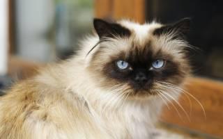 Из-за чего у кота обильное слюноотделение