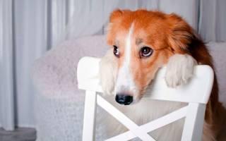 Опухоли у собак: симптомы, как лечить