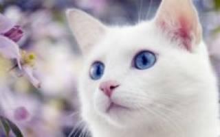 Как рожают кошки