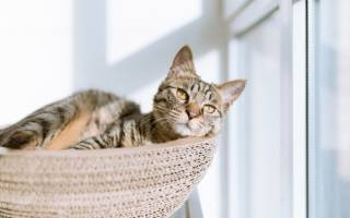 Окситоцин при родах у кошки: характеристики препарата и его действие