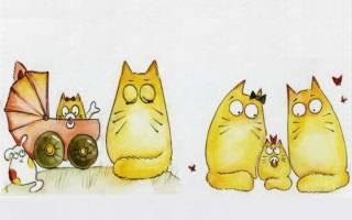 Как узнать какого пола котенок