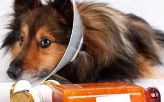 Расстройство пищеварения собак
