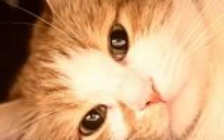 Атония у кошек — обзор заболевания
