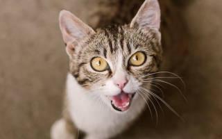 Как общаются кошки между собой