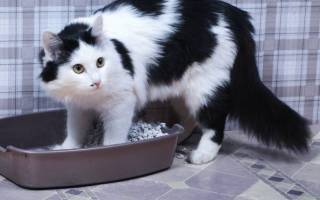 Темная моча у кота после кастрации: причины, лечение