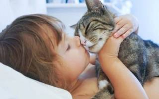 Кошки лечат человека: проверка фактов