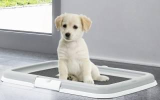 Туалет для собак мелких пород: как выбрать