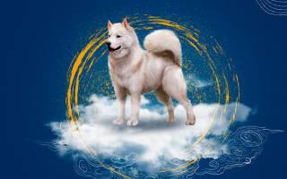 Гороскоп: собака-козерог