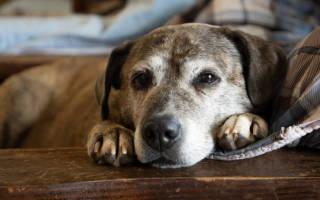 Как долго живут собаки