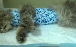 Смерть кота после кастрации: основные причины