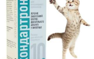Хондартрон для кошек: действие и особенности препарата