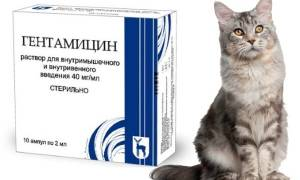 Гентамицин для кошек: характеристика препарата, показания к применению