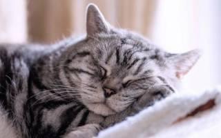Можно ли спать с кошками