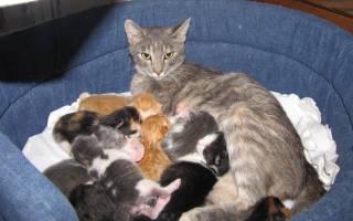 Чем кормить кошку после родов