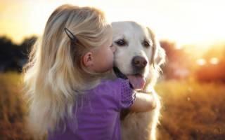 Понимают ли собаки, когда их целуют: разбираемся в чувствах и эмоциях питомца