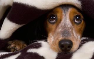 Собака боится других собак: причины и методы устранения фобии