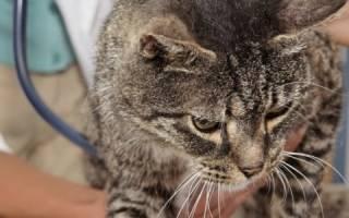 Криптоспоридиоз — паразитарное заболевание у кошек