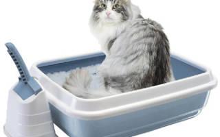 Как отучить кошку писать в неположенном месте: советы и рекомендации экспертов