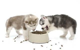 Сколько раз в день кормить щенка. Правила здорового питания