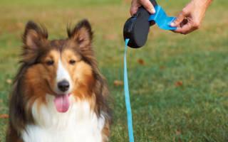 Какой поводок для собаки лучше