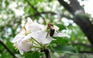 Содержание пчел на приусадебном участке: с чего начать