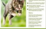 Кастрация котов: вред или польза?