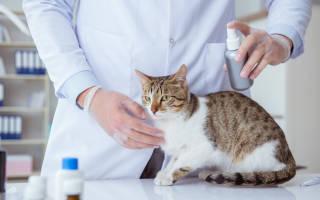 Аллергия у кошек и котов