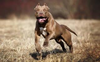 Лучшие сторожевые собаки