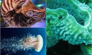 Самые древние рыбы на планете: кто они