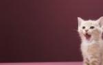 Каким сухим кормом лучше кормить кошку: советы и рекомендации