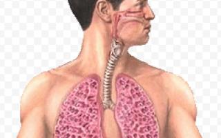 Как проверить, есть ли аллергия на попугаев: основные симптомы