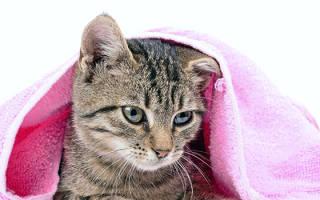 Когда можно купать котенка: пошаговая инструкция