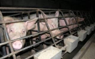 Самое необходимое оборудование для свиноводства
