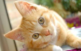 Как проверить аллергию на кошек