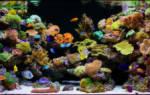 Запускаем морской аквариум