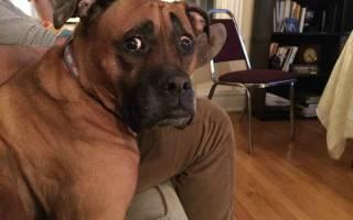 Как часто нужно глистогонить собаку