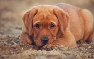 Почему собака ест песок: когда игра перерастая в заболевание