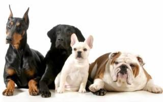 Определяем породу своей собаки: методы и способы