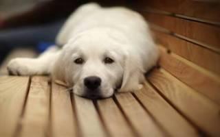 Собака икает не случайно! Определяем причину и приступаем к лечению