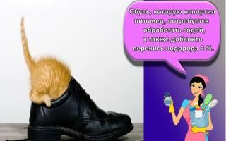 Как вывести кошачий запах из обуви