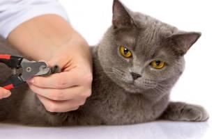 Как удалить кошке когти, не повреждая сосудов