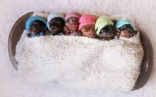 Понос у новорожденных щенков: причины, лечение