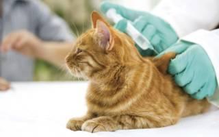 Когда и какие прививки необходимо делать котятам?