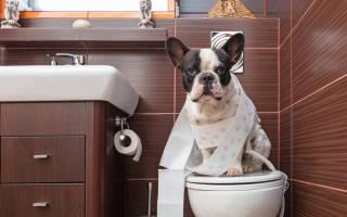 Лоток для собак: что выбрать для домашнего чистюли?