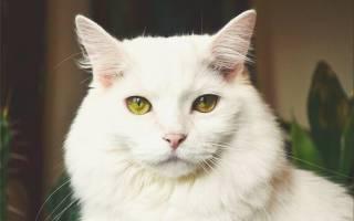 Есть ли у кошек память?