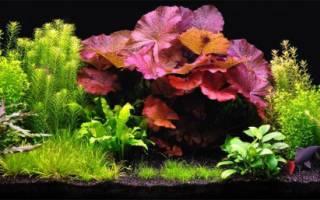 Посадка, совместимость аквариумных растений