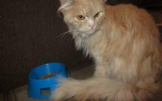 Как выстричь колтуны у кота